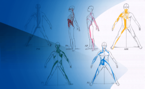 formación en biomecánica y técnicas de tratamiento en g.d.s